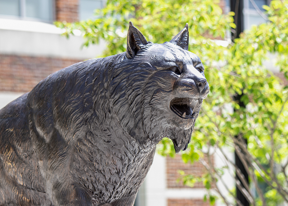 Are you destined to be a Bobcat-APPLY NOW (image of Bobcat statue)